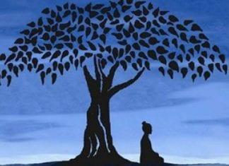 meditation-bouddha-arbre-324x235